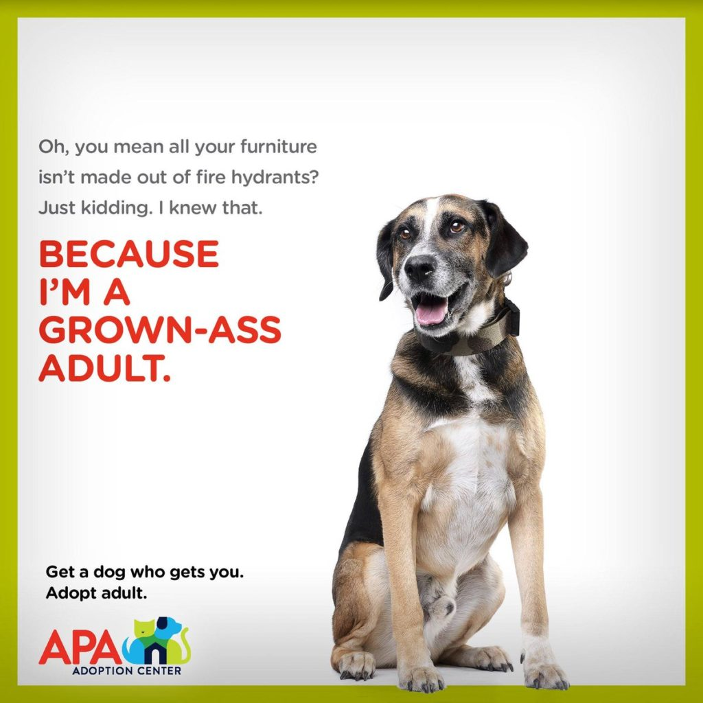 Ad for pet adoption