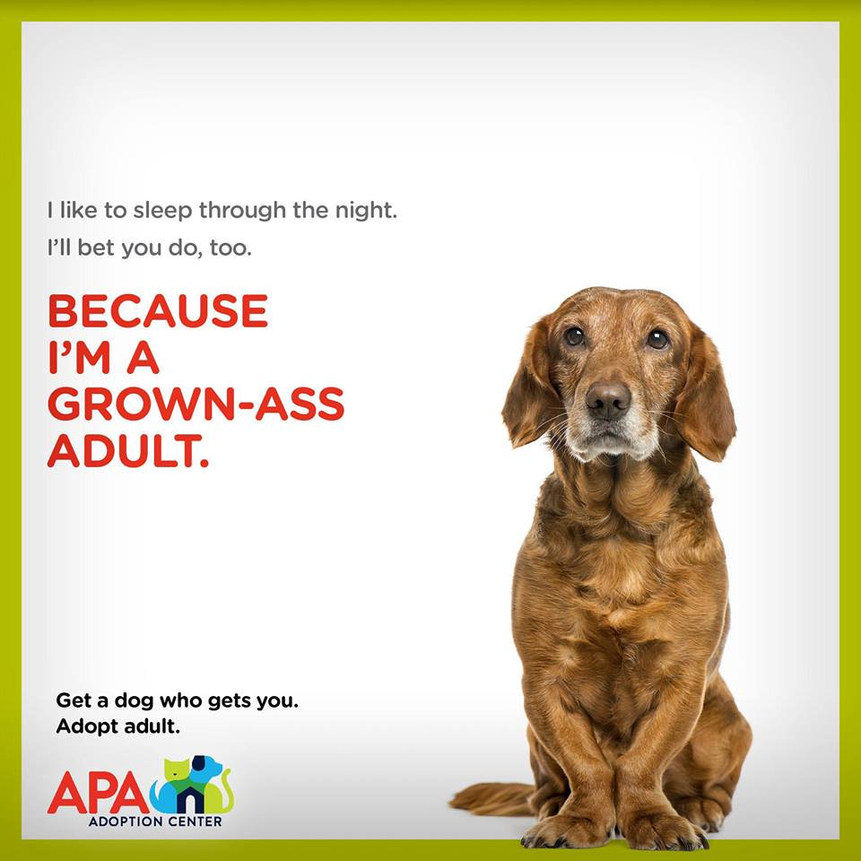Ad for dog adoption